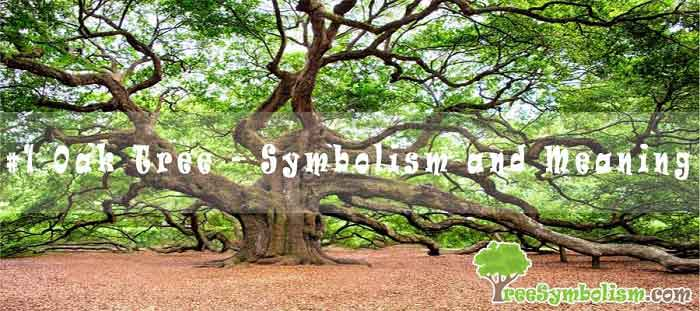 #1 Oak Tree - Symbolism and Meaning