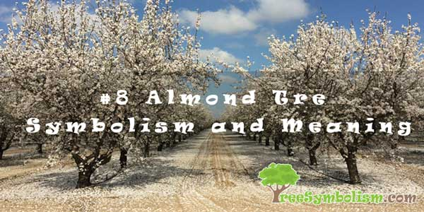 #8 Almond Tree – Symbolism and Meaning