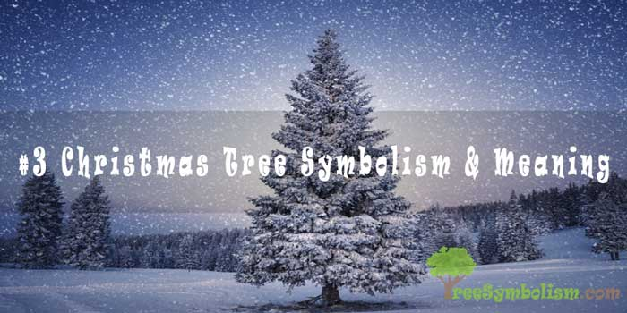 #3 Christmas Tree Symbolism & Meaning