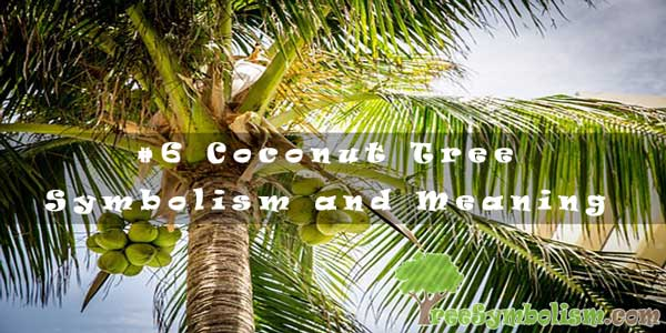 #6 Coconut Tree – Symbolism and Meaning