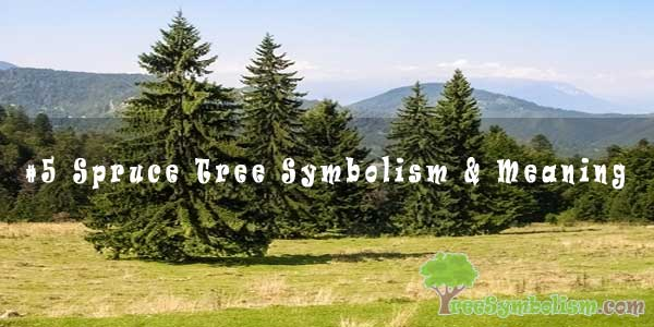 #5 Spruce Tree Symbolism & Meaning