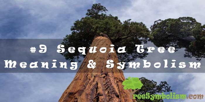 #9 Sequoia Tree - Meaning & Symbolism