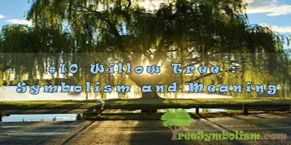 #10 Willow Tree : Symbolism and Meaning