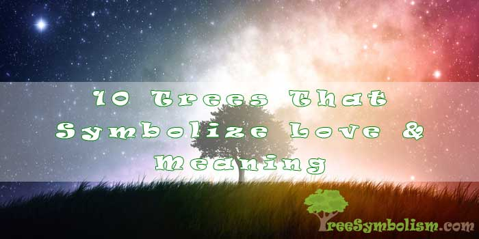 10 Trees That Symbolize Love & Meaning