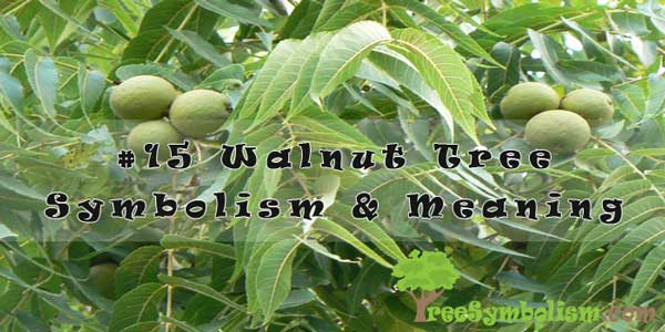 #15 Walnut Tree Symbolism & Meaning