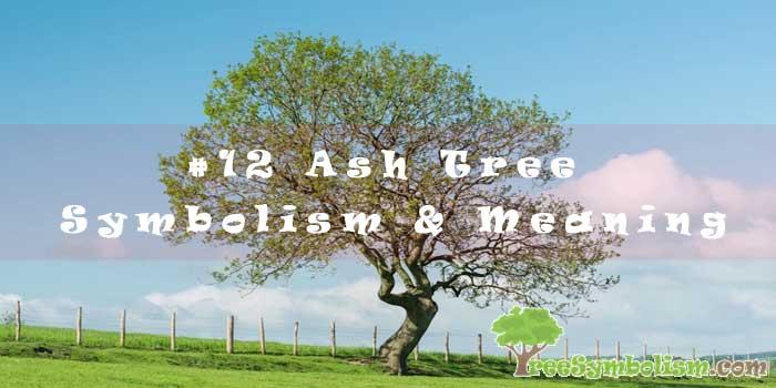 #12 Ash Tree Symbolism & Meaning