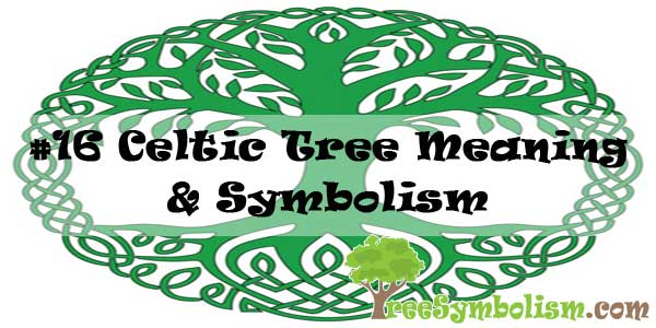 16 Celtic Tree Meaning & Symbolism