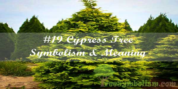 #19 Cypress Tree Symbolism & Meaning
