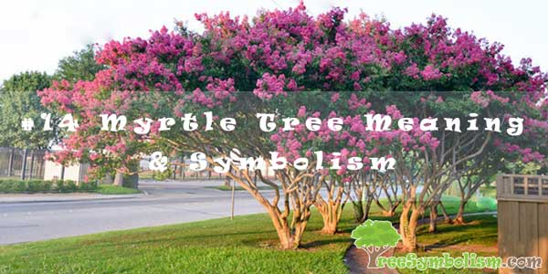 #14 Myrtle Tree Meaning & Symbolism