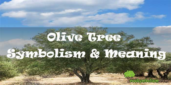 #17 Olive Tree Symbolism & Meaning