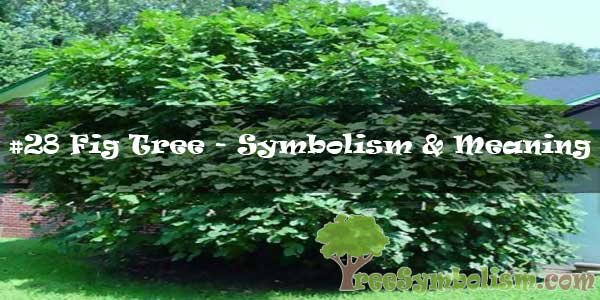 #28 Fig Tree - Symbolism & Meaning