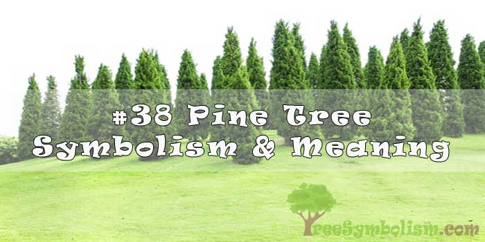 #38 Pine Tree Symbolism & Meaning