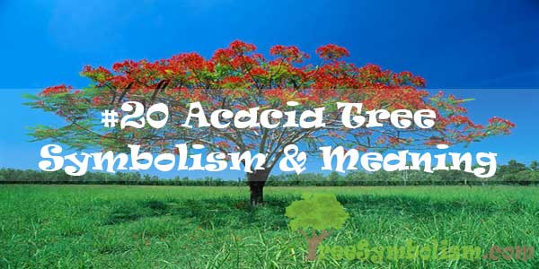 #20 Acacia Tree Symbolism & Meaning