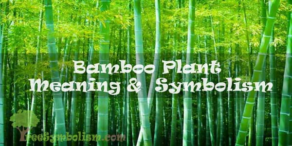 Bamboo Plant - Meaning & Symbolism