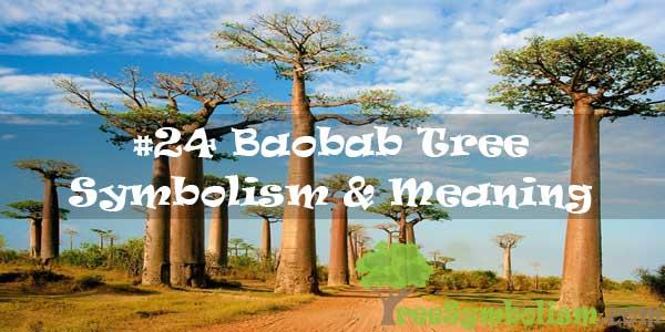 #24 Baobab Tree Symbolism & Meaning