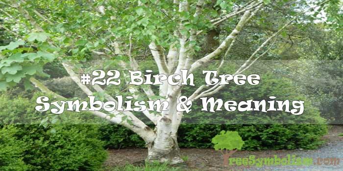 #22 Birch Tree Symbolism & Meaning