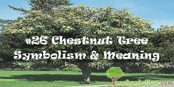 #26 Chestnut Tree Symbolism & Meaning