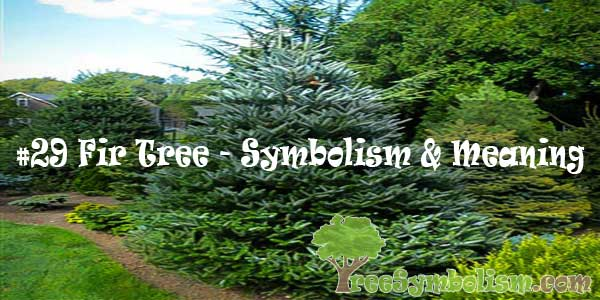 #29 Fir Tree - Symbolism & Meaning