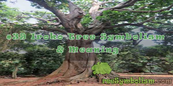 #39 Iroko Tree Symbolism & Meaning