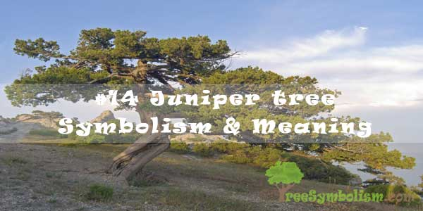 Juniper tree Symbolism & Meaning