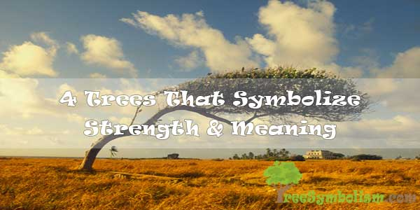 4 Trees That Symbolize Strength & Meaning