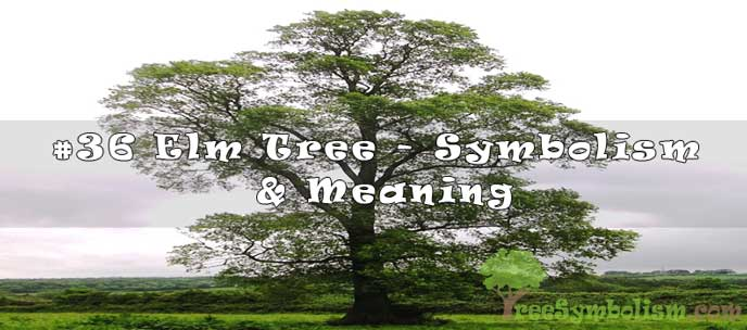 #36 Elm Tree - Symbolism & Meaning