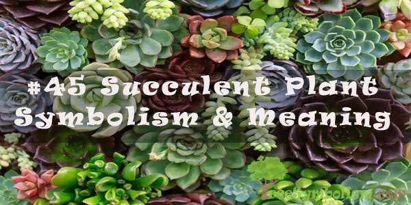 #45 Succulent Plant - Symbolism & Meaning