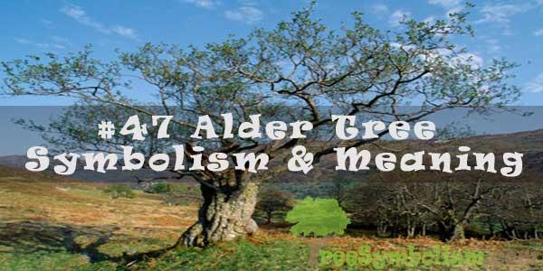 #47 Alder Tree - Symbolism & Meaning