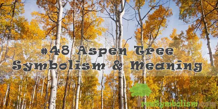 #48 Aspen Tree Symbolism & Meaning