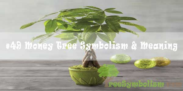 #49 Money Tree Symbolism & Meaning
