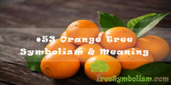 #53 Orange Tree Symbolism & Meaning