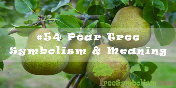 #54 Pear Tree Symbolism & Meaning