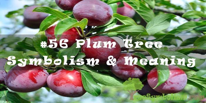 #56 Plum Tree Symbolism & Meaning
