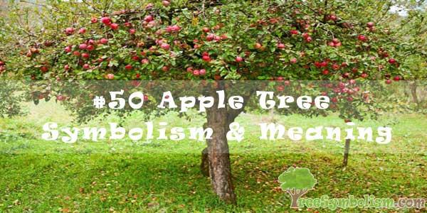 #50 Apple Tree Symbolism & Meaning