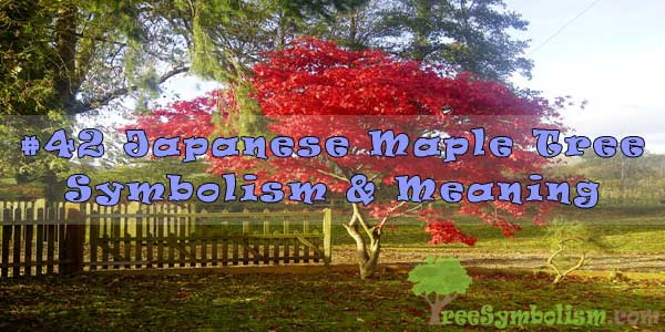 #42 Japanese Maple Tree Symbolism & Meaning