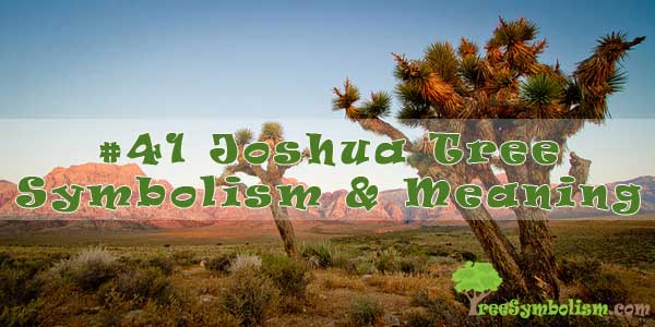 #41 Joshua Tree Symbolism & Meaning