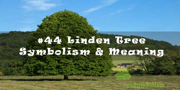 #44 Linden Tree - Symbolism & Meaning