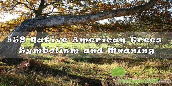 #52 Native American Tree Symbolism and Meaning