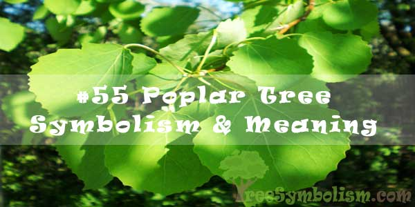 #55 Poplar Tree Symbolism & Meaning