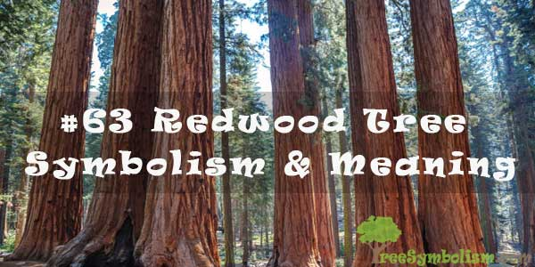 #63 Redwood Tree - Symbolism & Meaning