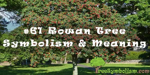 #61 Rowan Tree - Symbolism & Meaning