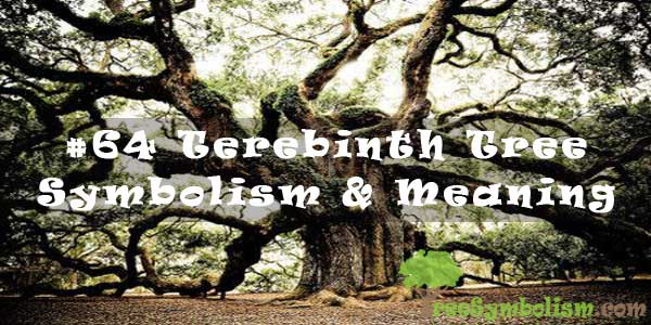 #64 Terebinth Tree - Symbolism & Meaning