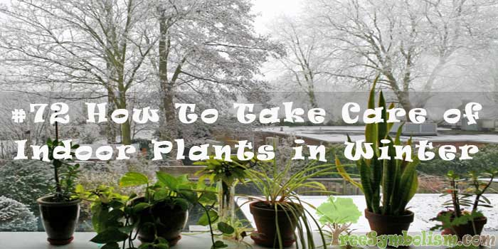 #72 How To Take Care of Indoor Plants in Winter