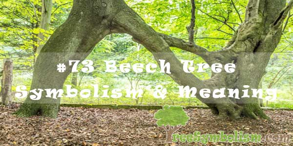 #73 Beech Tree Symbolism & Meaning