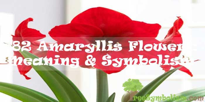 #82 Amaryllis Flower : Meaning & Symbolism