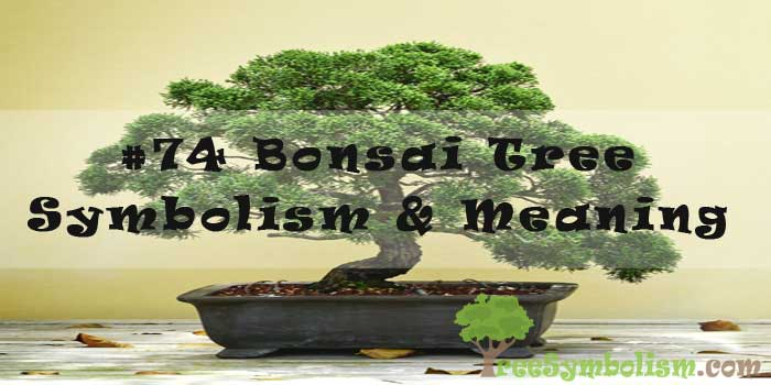 #74 Bonsai Tree - Symbolism & Meaning
