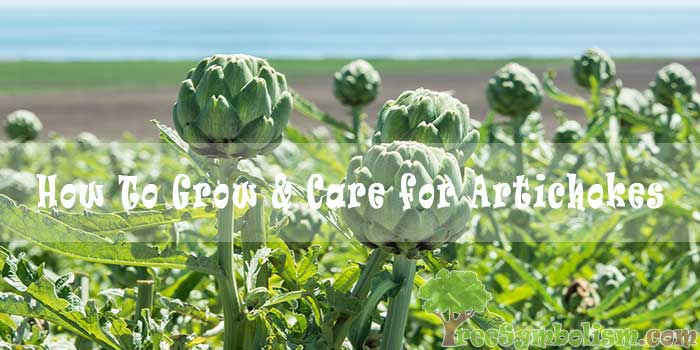 #45 How To Grow & Care for Artichokes