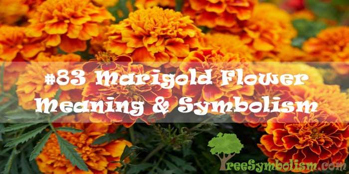 #83 Marigold Flower - Meaning & Symbolism