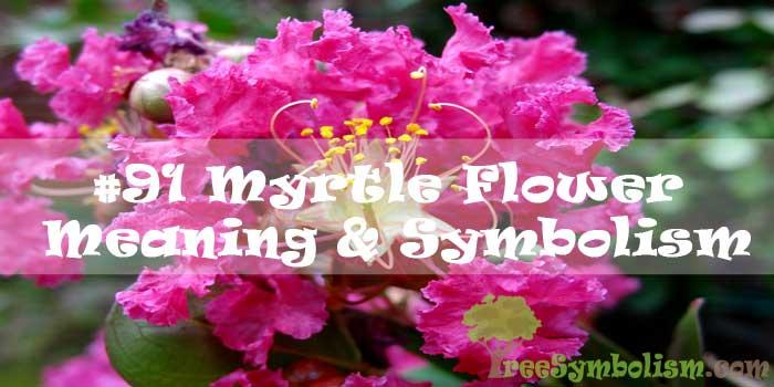 #91 Myrtle Flower : Meaning & Symbolism