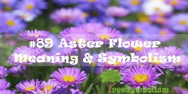 #89 Aster Flower : Meaning & Symbolism